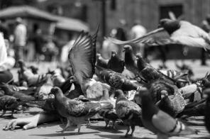 En la que cubiertos por estos rodeadores con alas hasta el cuello, tres estudiantes de la Universidad Pedagógica Nacional crearon una metáfora a partir de los animales comiéndolos a nosotros.